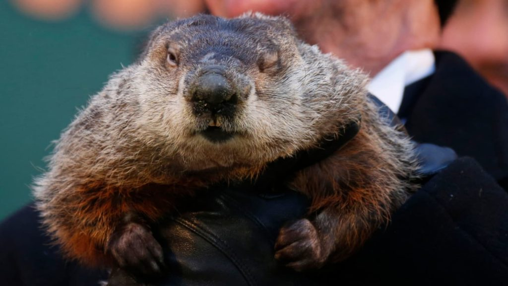 Punxutawney Phil Says